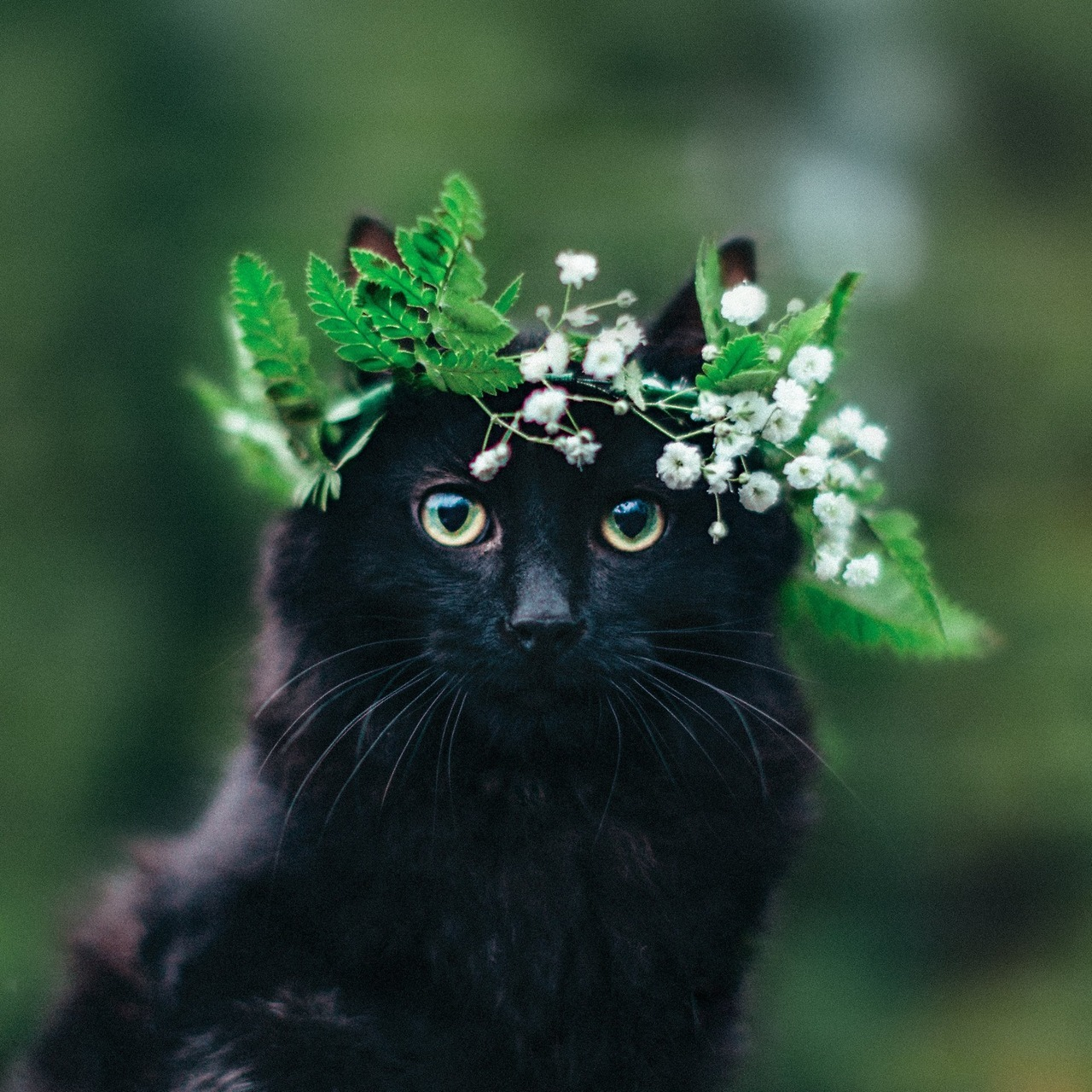 Cats with flower crowns tumblr izmirmasajfo