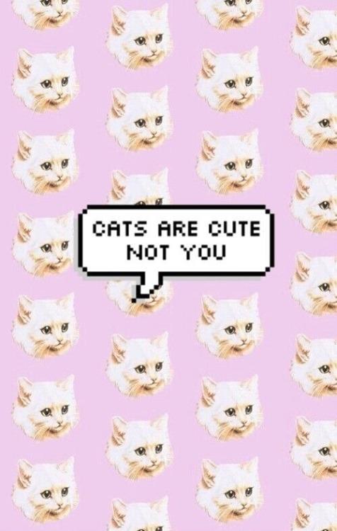 Cute Hamburger Wallpaper Pusheen Unicorn Cat Tumblr