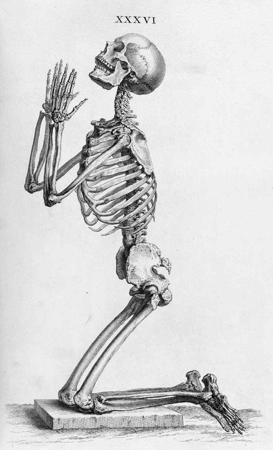 Bone types Top: Metacarpals (long bones) and