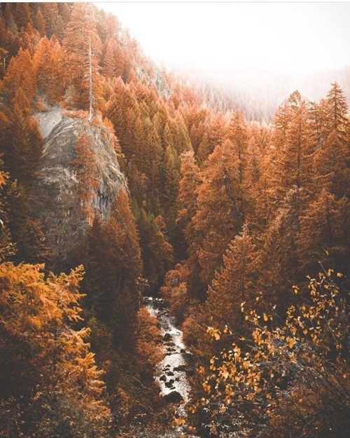 Fall Wallpaper Pintrest Autumn Leaves Aesthetic Tumblr