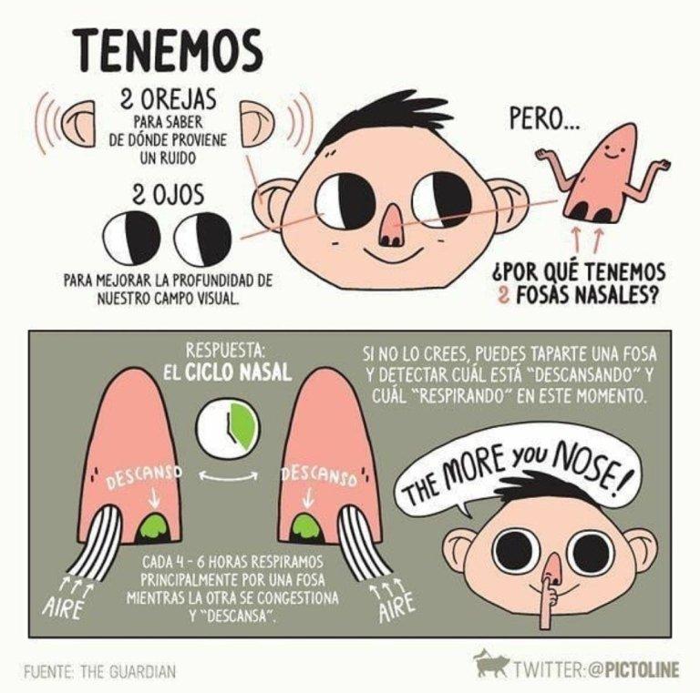 El ciclo nasal