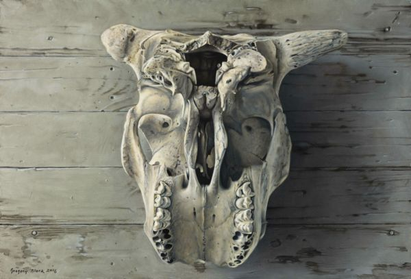 Kill of Cow Head Picture Gallery