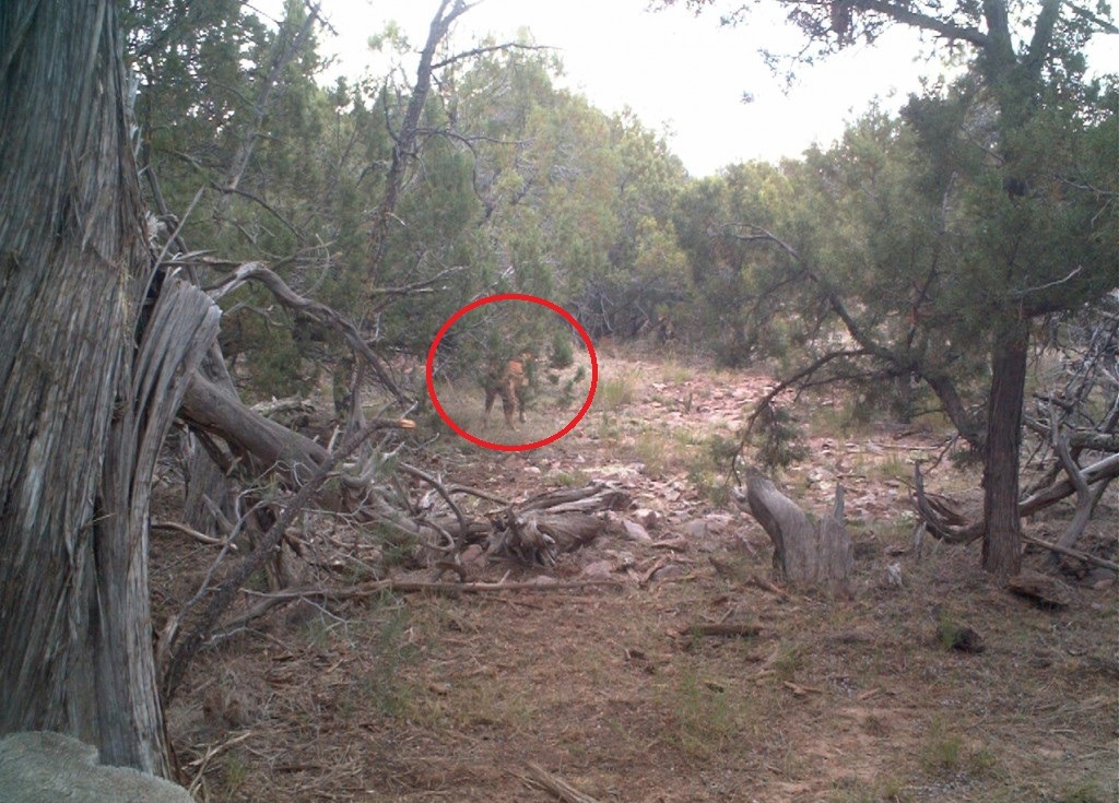 Cryptid wendigo the watts valley wolf ape is a strange beast ufo sciox Image collections