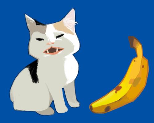 Cat Looking At Banana Meme