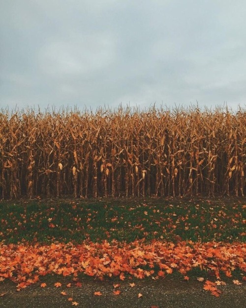 Fall Wallpaper Backgrounds Pumpkins Fall Leaves On Tumblr