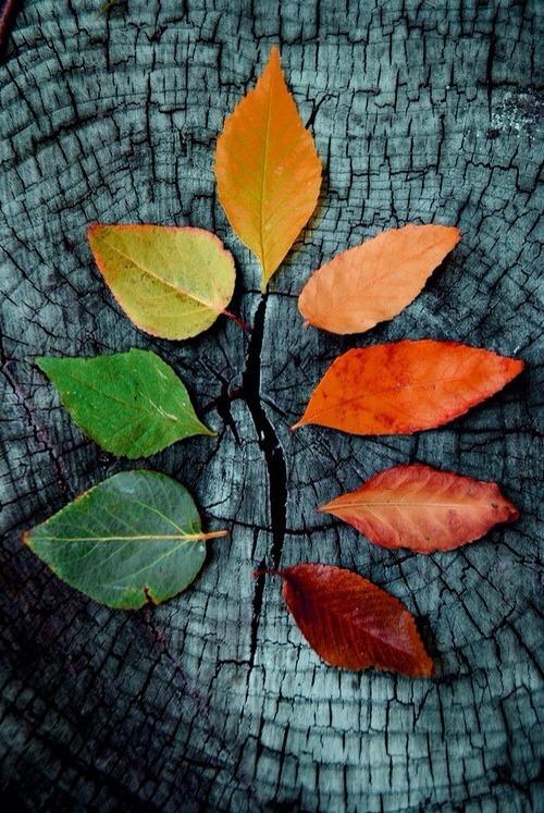 Dark Fall Wallpaper Natureza On Tumblr