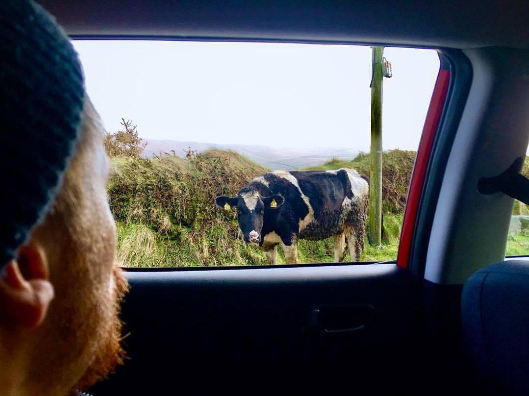 Neighbourhood. Ireland, 2018..#photooftheday #onephotoaday #photography #fujix100t #beach #ireland #eire #free #freedom #sea #ocean #seaside #cliff #valentiaisland #kerry #cow #cows #kuh #muh #hungry #landscape #landscapephotography #nature #naturephotography (hier: Valentia Island)