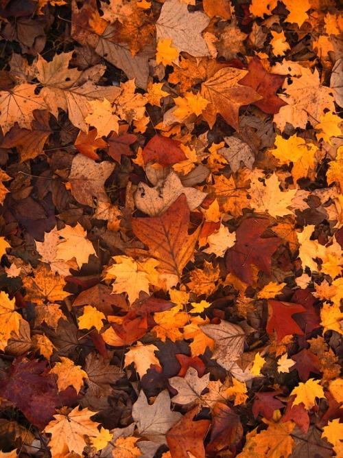 Leaves On Tumblr