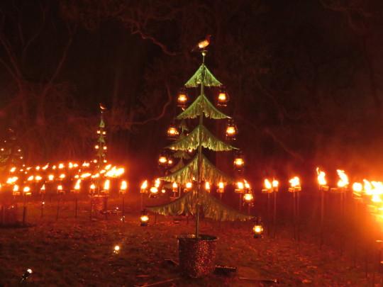 Flaming trees at Christmas at Kew