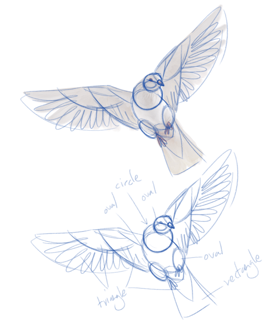 Tumblr How Wings Draw
