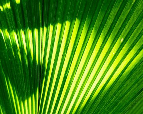 Wallpaper Hippie Girl Palm Leaf On Tumblr