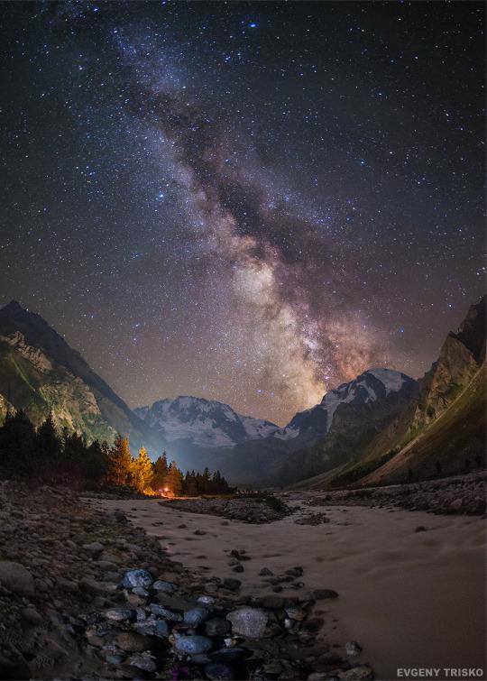 Dark Forests Stars