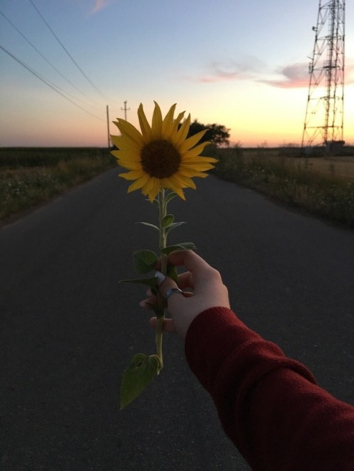 Pastel Wallpaper Quotes Hipster Sunflower Tumblr
