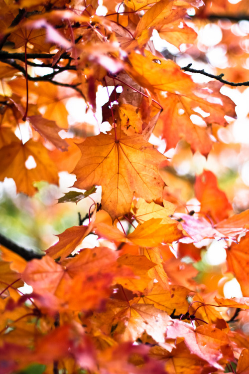 Fall Season Wallpapers For Iphone Autumn Leaves On Tumblr