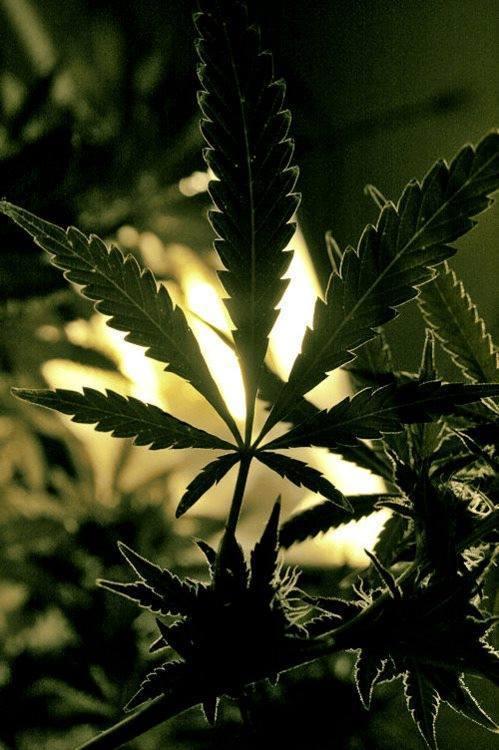 plantas medicinales  Tumblr
