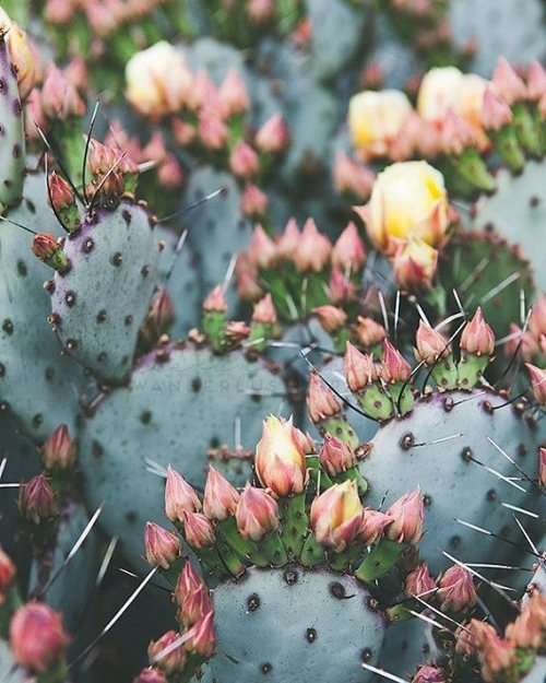 Cute Pastel Wallpaper For Iphone Pastel Cactus Tumblr