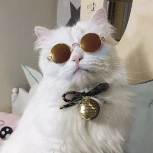 Cute Moustache Wallpapers Cats Wearing Sunglasses Tumblr