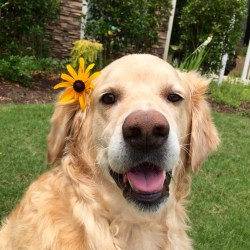 Golden Puppies And Flowers Gardening Flower And Vegetables