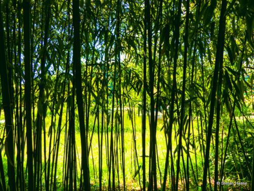 Bamboo Curtain