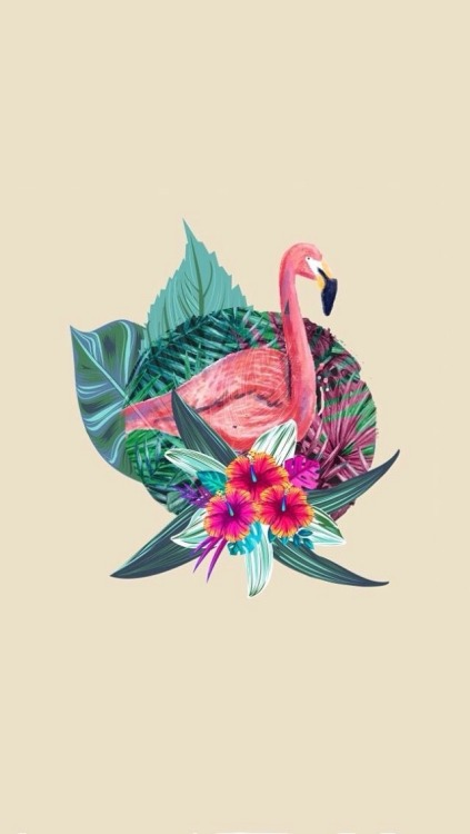 Cute Holographic Wallpapers Pink Flamingo Wallpaper Tumblr