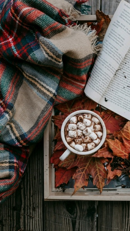 Fall Dog Wallpaper Blankets On Tumblr