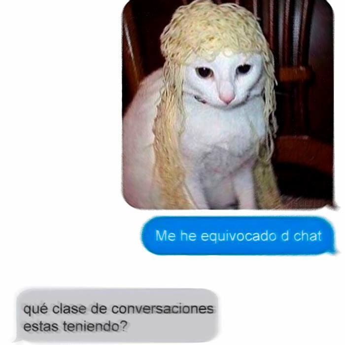 Gato con peluca