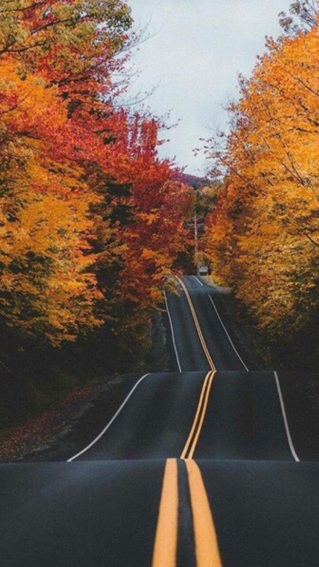 Fall Vibes Wallpaper Autumn