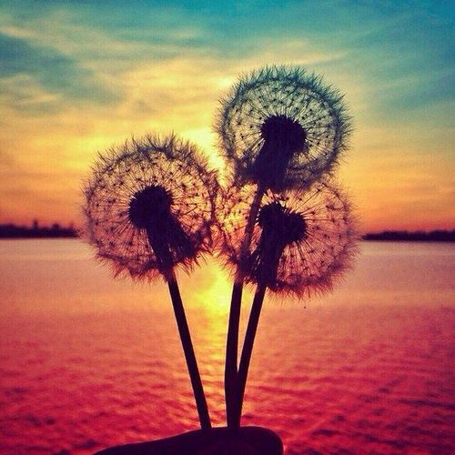 Cute Wallpapers Toast Dandelion Wallpaper Tumblr