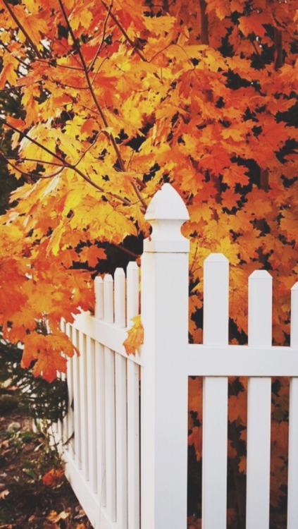 Fall Leaves Fox Wallpaper Coffee Lockscreen Tumblr