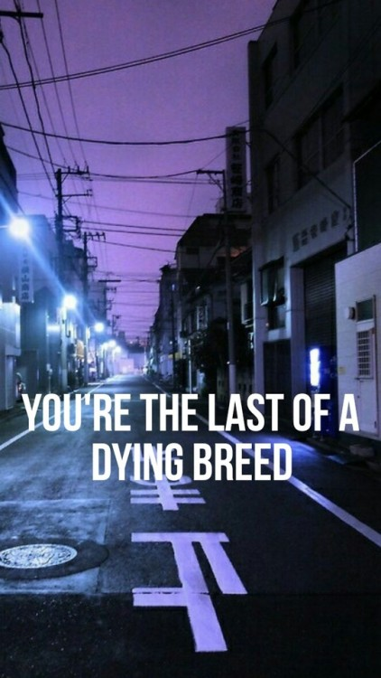 Fall Out Boy Wallpaper Lyrics The Last Of The Real Ones By Fall Out Boy Lyric Band