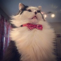 animals in bow ties | Tumblr