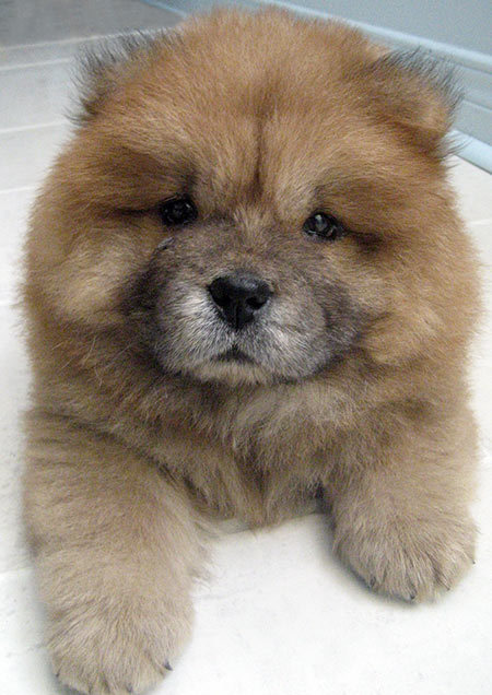 Amazing Cub Chubby Adorable Dog - tumblr_m1df8ePKMv1rsry01o1_500  Pictures_272640  .jpg?resize\u003d450%2C636