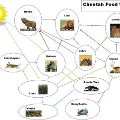 Savanna Animal Food Chain Diagram Software To Draw Process Flow African By Alex And Aziz 098765434321 Biom En Nature The Tropical Glogster Edu Interactive Multimedia