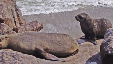 Help stop the Namibian seal slaughter