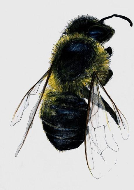 smallbee