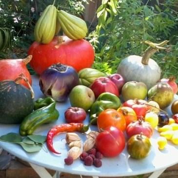 Cueillette d'automne du jardin partagé