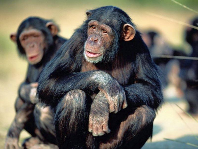 Monos sorprendidos...