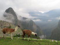 Machu Picchu - Peru - 7 Cantos do Mundo