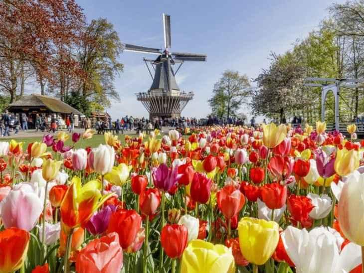 10 destinos incríveis que sonho em conhecer - Keukenhof - Holanda - 7 Cantos do Mundo