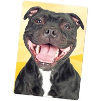 Staffordshire Bull Terrier Staffy Staff Dog Large Fridge