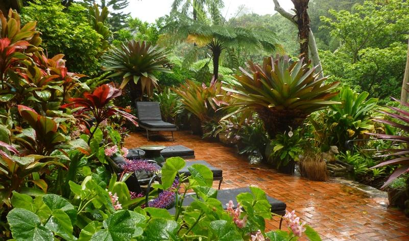Small Tropical Garden Ideas The Gardening