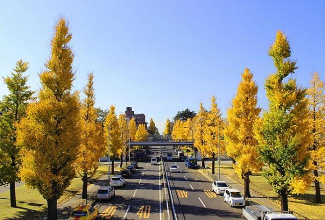 駒沢おリンビック公園