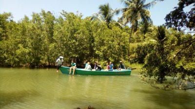 Mangrove Reforestation, North Coast Dom. Republic 2018