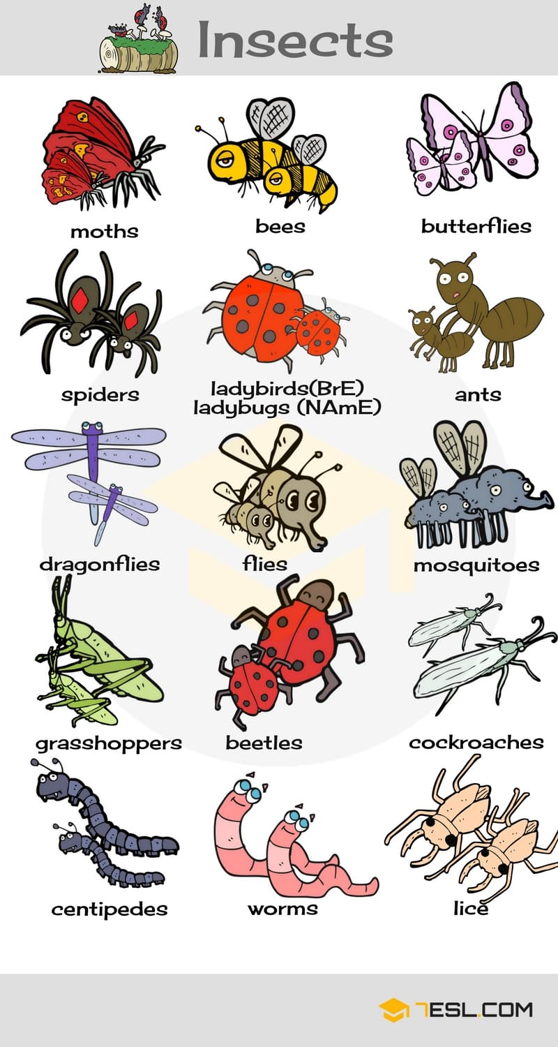 Names Of Insects List Of Insects With Pictures  7 E S L