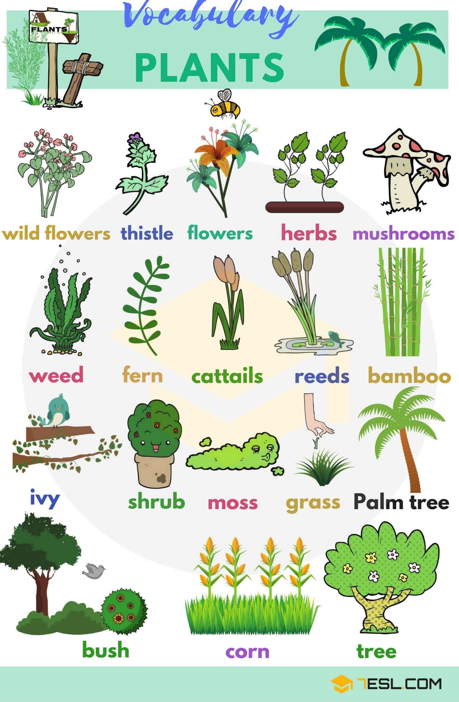 Plants Vocabulary
