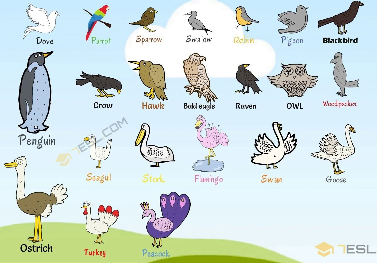 hight resolution of bird names list of birds with useful birds images