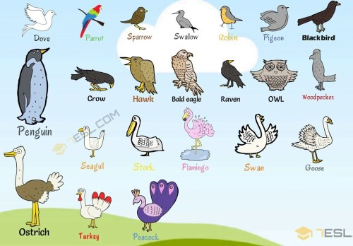 small resolution of bird names list of birds with useful birds images