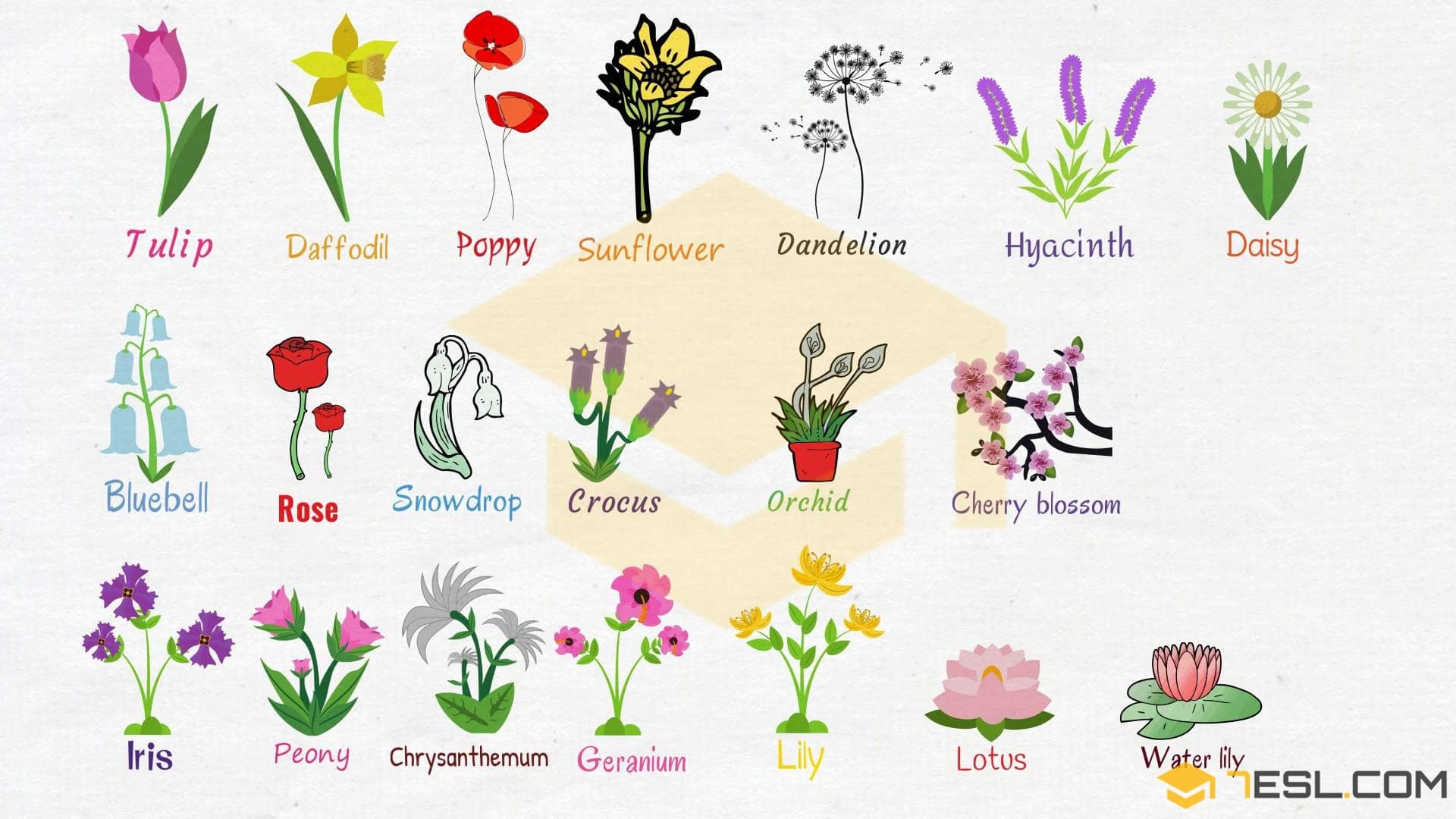 Flowers Names Useful List Of Flowers With Images