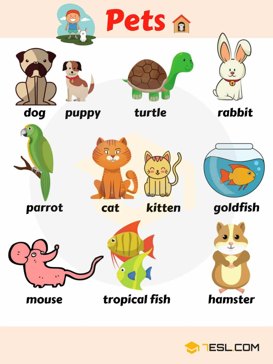Pet Names List Of Pets & Types Of Pets With Pictures  7 E S L