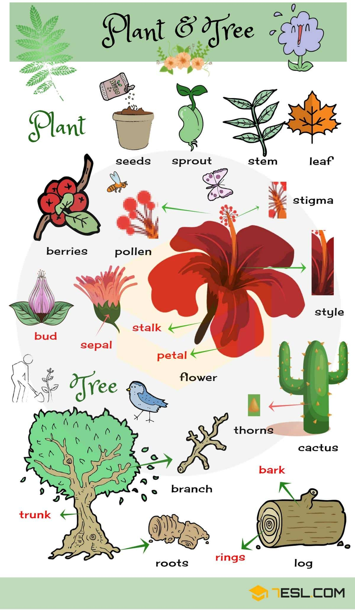 hight resolution of list of plant and flower names